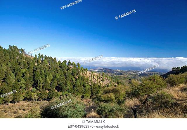 Central Gran Canaria, view east over deep valley , canarian pine trees on the slopes