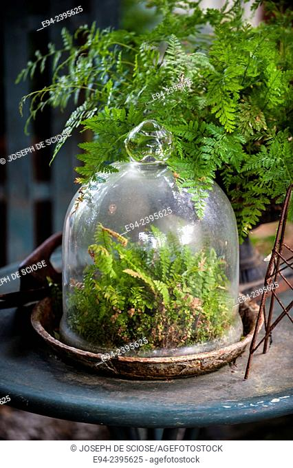 Table with a glass cloche with small ferns in a garden setting