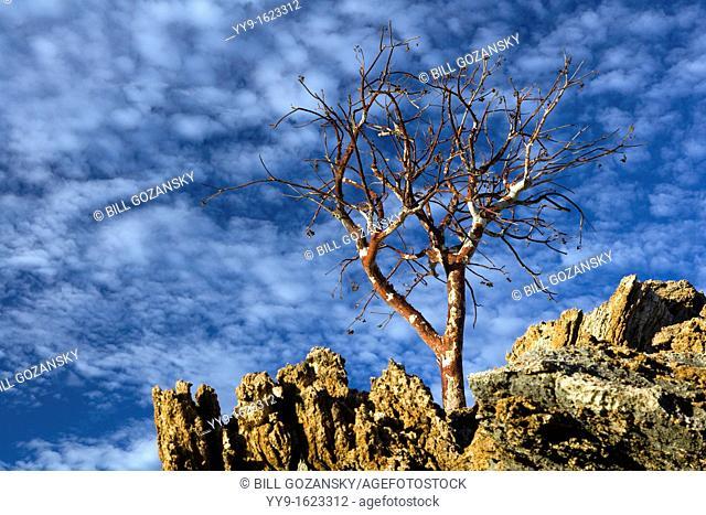 Lone Tree and Blue Sky near - Etambura Camp - Orupembe Conservancy - Kaokoland, Namibia