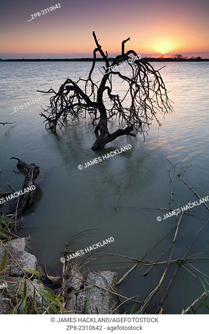 A dead tree protrudes from the water at sunset. Donna, Texas, USA
