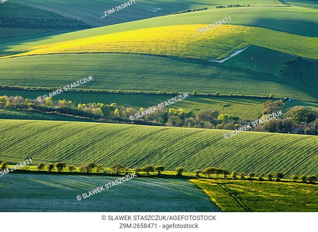 Spring evening on the South Downs near Brighton, East Sussex, England