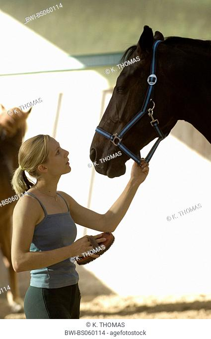 Young woman is currying her horse