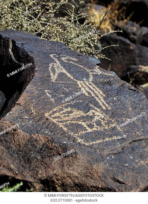 Macaw petroglyph, Boca Negra Canyon, Petroglyph National Monument, Albuquerque, New Mexico. Second image, at left, may be a Macaw in a cage, being transported