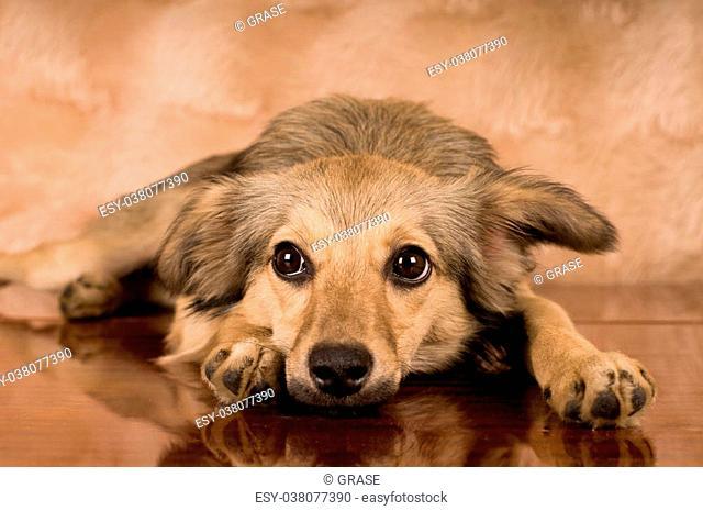 Cute mixed breed dog portrait at studio