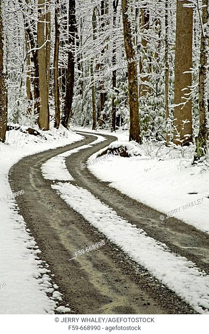 Winter, Snow, Road, Tracks, Greenbrier, Great Smoky Mountains National Park, Tennessee, USA
