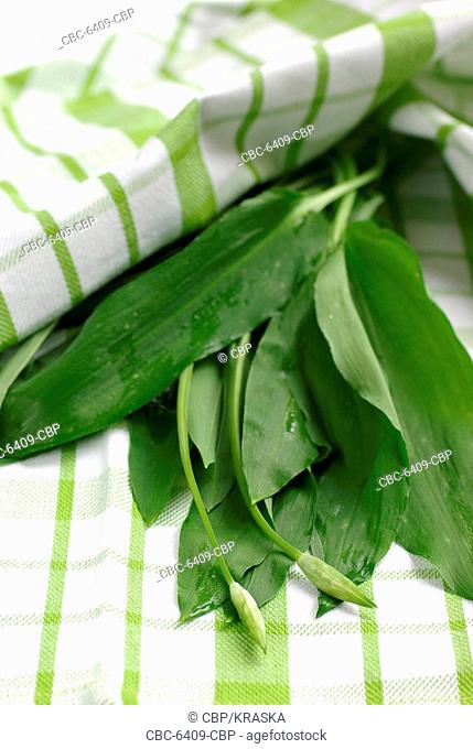 Fresh ramsons leaves on a green-white cloth
