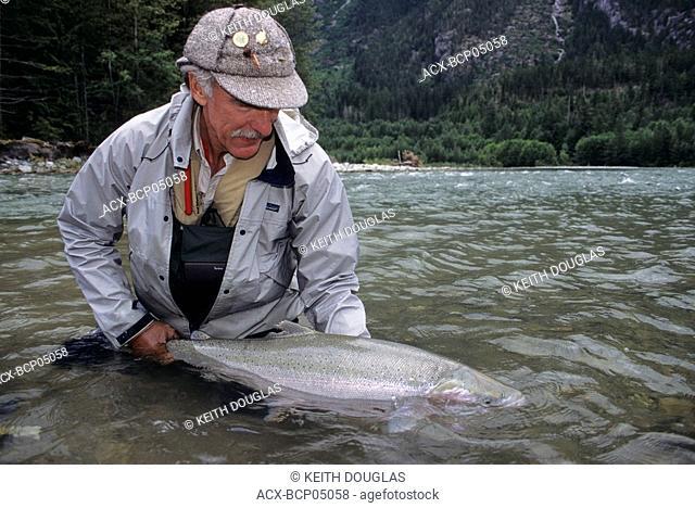 Angler releasing large steelhead, Dean river, British Columbia, Canada