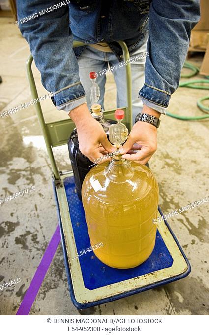 Preparing grape juice for wine making Finger Lakes Region New York