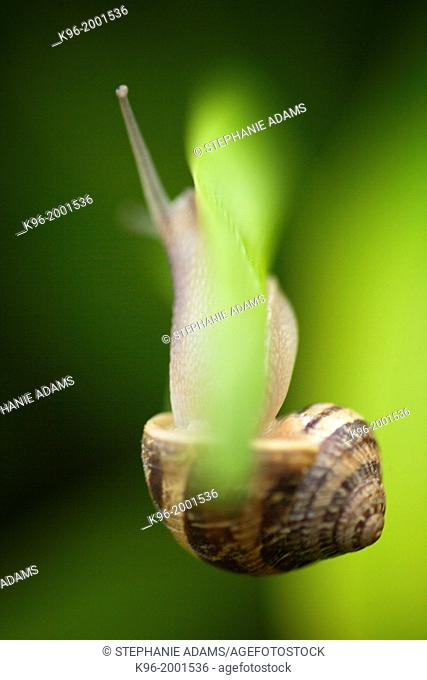 snail hanging on upside down