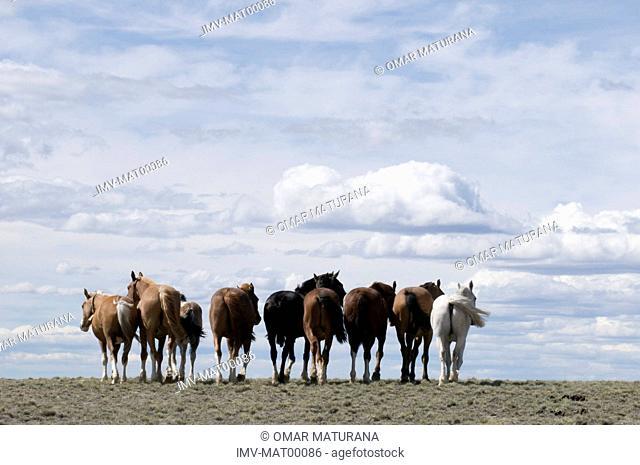 Horses, Patagonia,Argentina