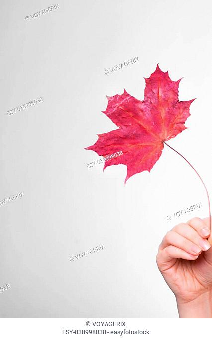 Skincare. Female hand holding leaf as symbol of red dry capillary skin complexion on gray