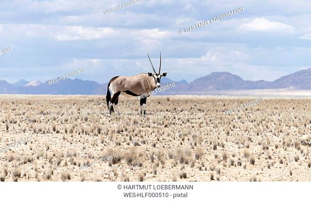 Namibia, Namib Naukluft National Park, Oryx