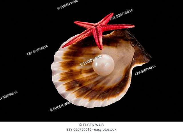pearl on the seashell . The exotic sea shell . treasure from the sea