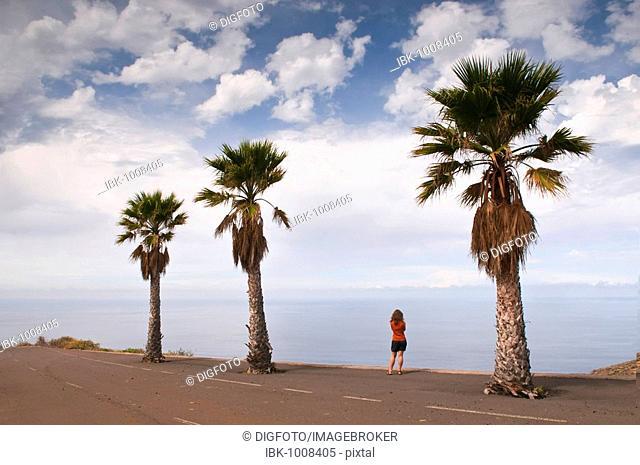 Date palm trees next to a road, woman, Santo Domingo de Garafia, La Palma, Canary Islands, Spain, Europe