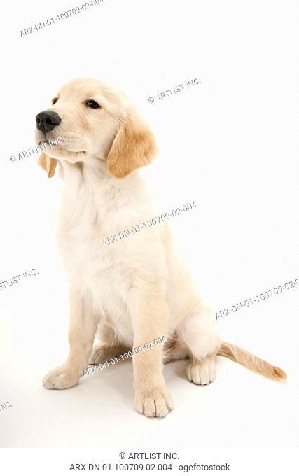 A sitting puppy looking far