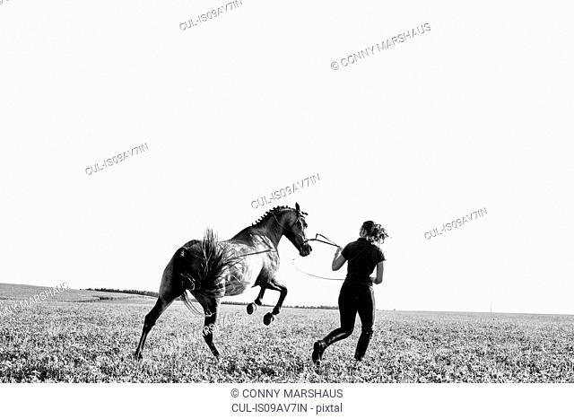 B&W image of woman training rearing horse in field