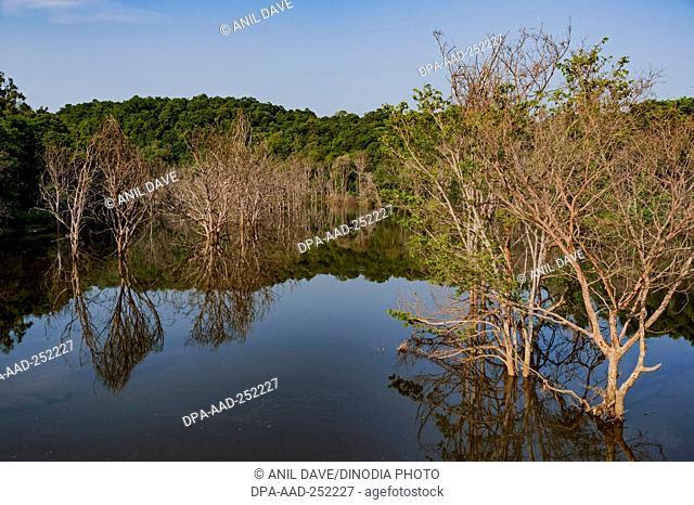 River, yellapur, karnataka, india, asia