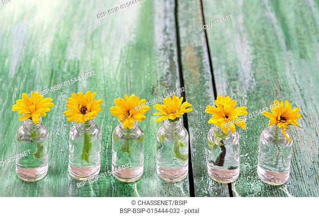 Medicine bottles with yellow calendula flowers on wooden background