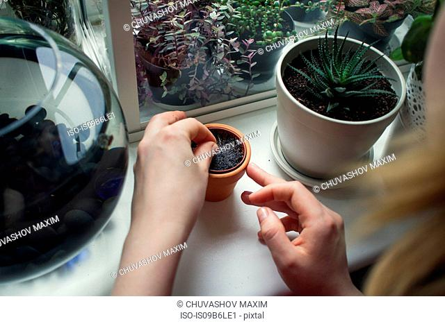 Over shoulder view of woman's hand tending potted plant on windowsill