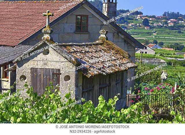Meaño, Albariño Area, Albariño Grape Vineyard, Horreo, Pontevedra, Galicia, Spain