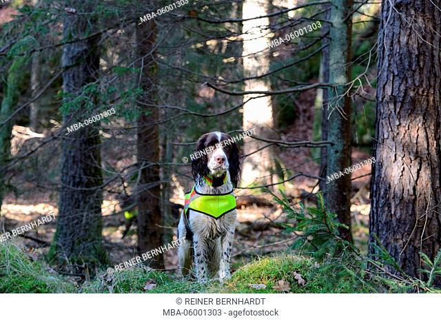 Wood, hound, wait