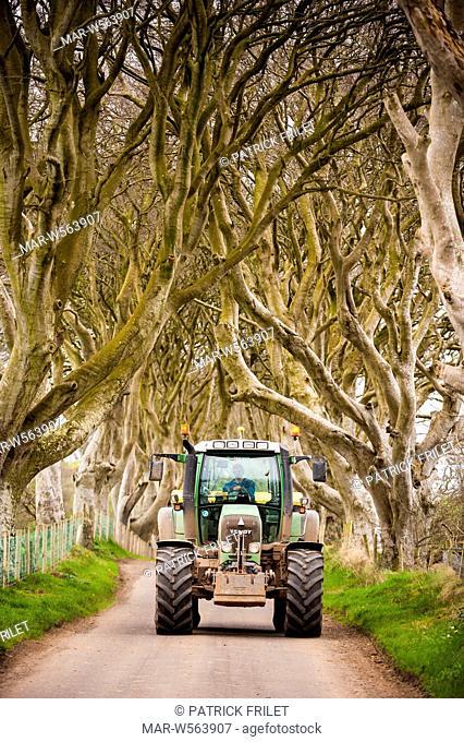 Dark Hedges road in Ballymoney with its beech trees, county antrim, ireland