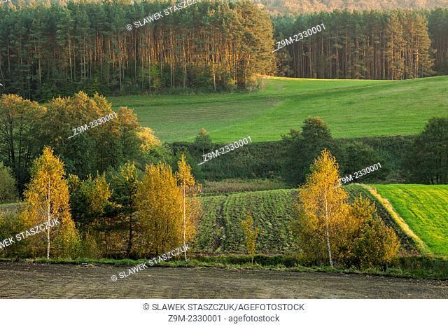 Autumn evening in Kashubian Landscape Park near Goreczyno, pomorskie province, Poland