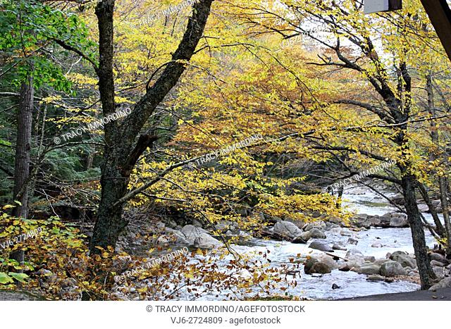 Flowing mountain stream nestled in a forest with fall foliage at the Flume Gorge in Franconia Notch State Park, in Lincoln, New Hampshire, USA