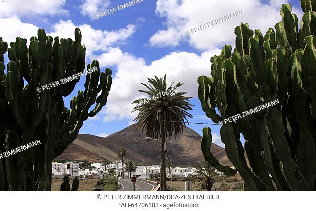 Cacti and palm tree on a street in Yaiza near the Timanfaya National Park on the Canary Island Lanzarote, Spain, 09 October 2015