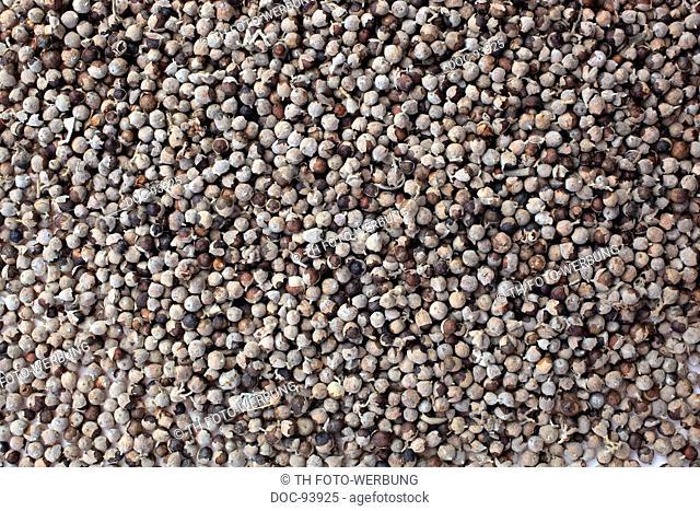 Medicinal plant Agnus castus , Chaste berry , Chastetree , Vitex agnus castus