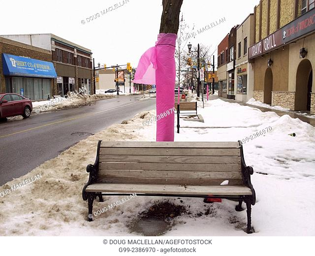 Hot pink plastic covering trees along Ottawa Street to prevent them from getting damaged during snow plawing in Windsor, Ontario, Canada