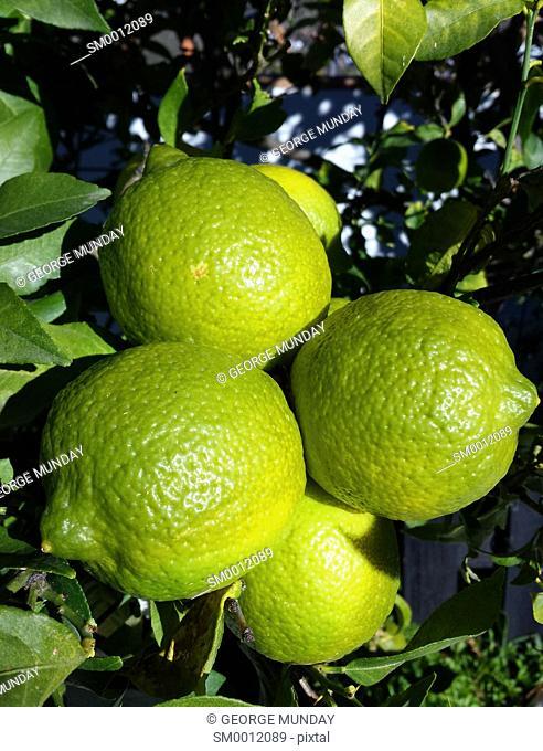 Lemons,