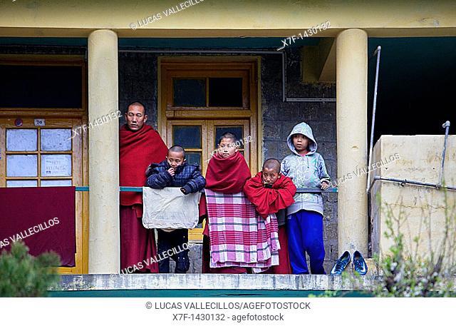 watching a ritual, in Namgyal Monastery, Tsuglagkhang complex  McLeod Ganj, Dharamsala, Himachal Pradesh state, India, Asia