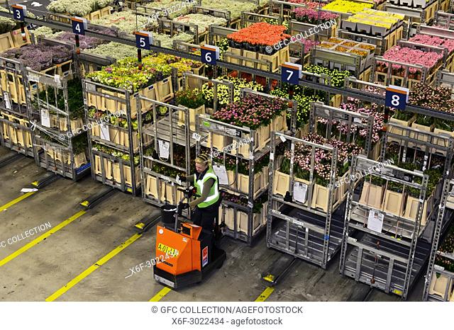 Auction lots of plants and flowers are collected in a warehouse for the auction, Royal FloraHolland, Aaalsmeer, Netherlands