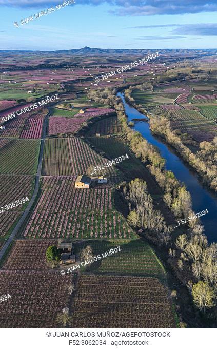 Flowering, Peach tree (Prunus persica), Fruiturisme, Tourism Experience, Aitona village, Segre river, Baix Segre, Lleida, Catalonia, Spain, Europe