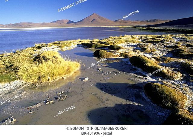 Laguna Colorado, National Park Eduardo Avaroa, Bolivia