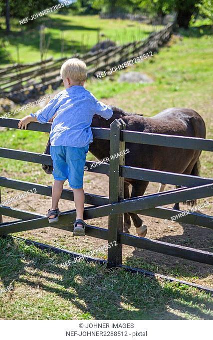 Boy stroking donkey