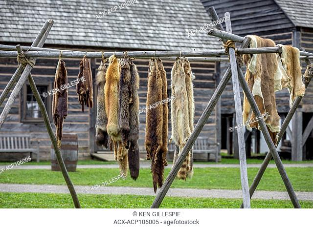 Fur pelts, from the Canadian fur trade era, Fort William Historical Park, Thunder Bay, Ontario, Canada