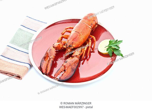 Cooked lobster in plate on white background