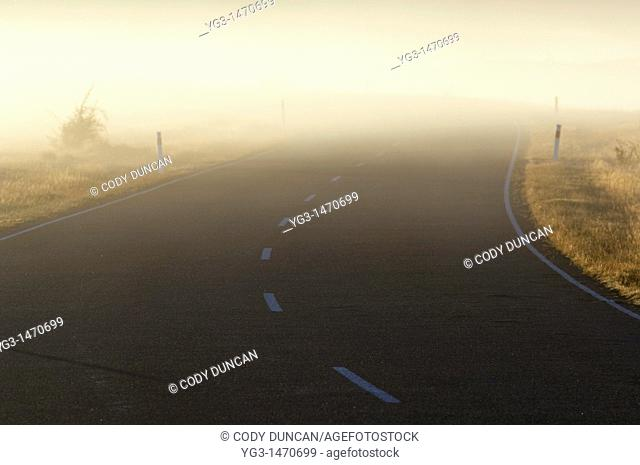 Morning mist creates poor visibility on road, New Zealand