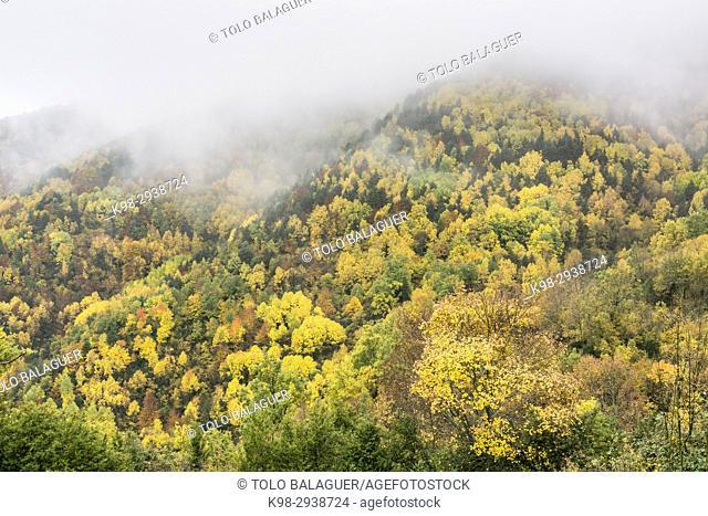 bosque caducifolio, Garganta de Escuaín, parque nacional de Ordesa y Monte Perdido, Provincia de Huesca, Comunidad Autónoma de Aragón, Pyrenees Mountains, Spain