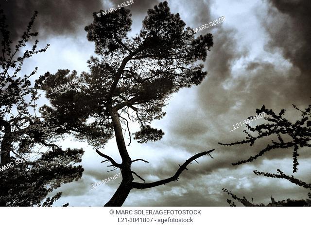 Tree under stormy sky. Catalonia, Spain