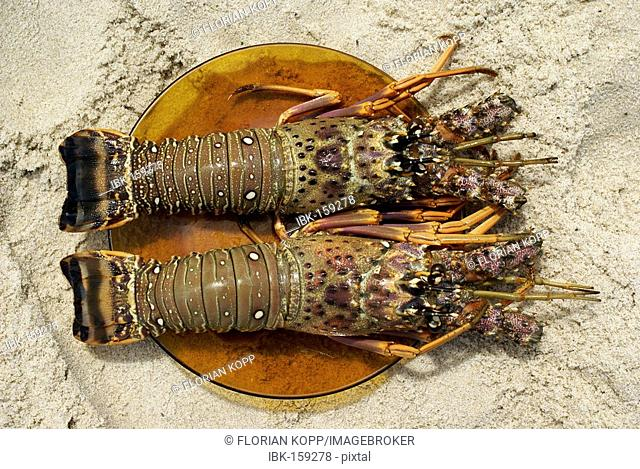 Spiny lobsters in a plate