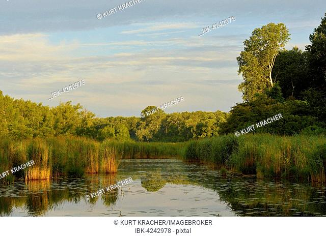 Morning light over a small lake, Gross-Enzersdorf, Lobau, Danube-Auen National Park, Lower Austria, Austria