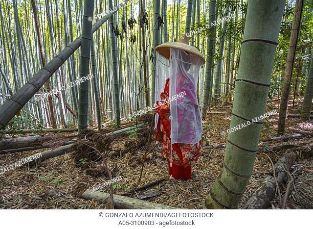 Kumano Kodo pilgrimage route. Daimon-zaka slope. Bamboo trees. Wakayama Prefecture. Kii Peninsula. Kansai region. Honshü Island