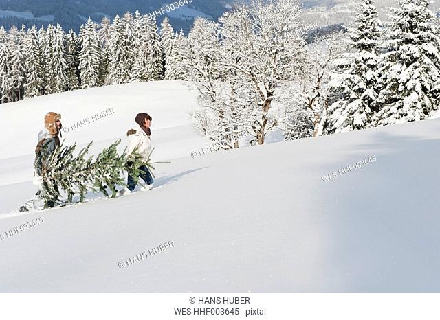 Austria, Salzburg Country, Flachau, Young man and woman carrying christmas tree in snow