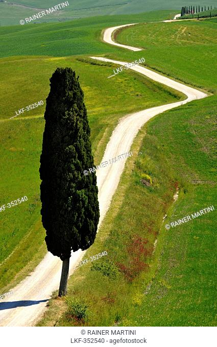 Remote country road with cypresses, Crete, Tuscany, Italy, Europe