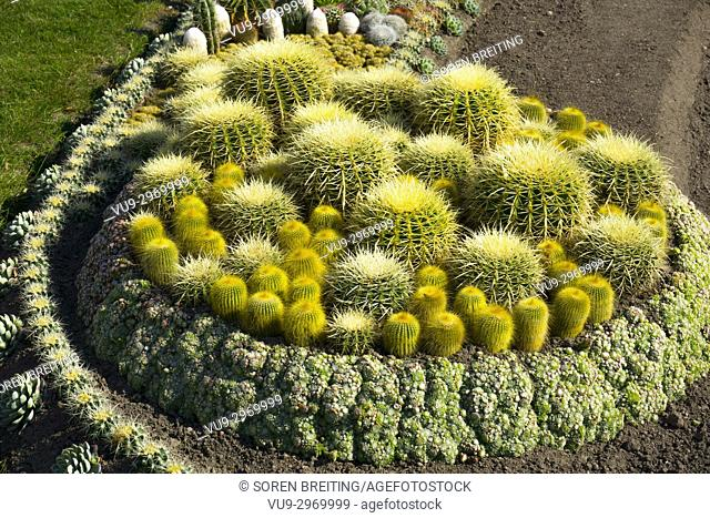 Cactus garden in public park, Norrkobing, Sweden, under establishment,