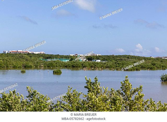 natrual reserve, flamingos, mangrove trees, Cayo Santa Maria, Villa Clara, Cuba, the republic Cuba, the Greater Antilles, the Caribbean