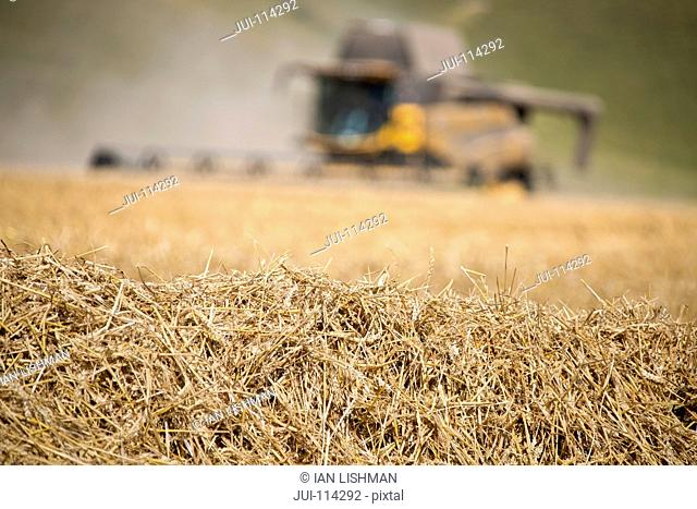 Straw From Harvesting With Combine Harvester In Background